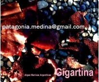 Algas marinas ventas para gastronomía, cosmetología o enraizamiento