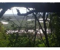 Arriendo campo  40 hectáreas sembrables