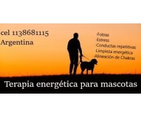 Terapia de sanación energética para mascotas - Médium animal