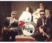 The Walrus clasic rock and roll band !