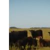 excelente campo en ayacucho 200ha 50% agricola