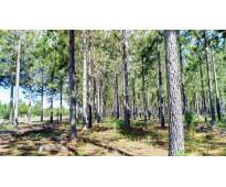 2871 hectáreas Forestado en Concepcion - Corrientes, Argentina