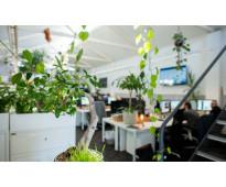 plantas de interior envio de plantas a domicilio biotienda plantas vivero online