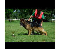 Cachorros Ovejero Alemán Pelo Largo. Pedigree