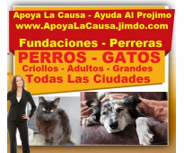 ⭐ GRATIS, Adopta Perros y Gatos, Adopcion, Fundacion, Bogota, Cali, Medellin, Ba...