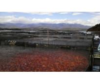 asesorias piscicolas,asesorias en piscicultura