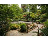 servicios de jardineria,servicio de jardineria,jardineria