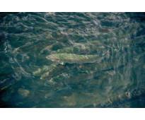 Sistemas garantizados para acuicultura
