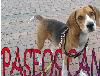 Paseadores de perros, paseamos y cuidamos a su mascota con amor