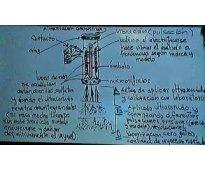 Lavado de inyectores con laboratorio ultrasonido-calibración