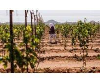 Importantes empresas agrícolas buscan personal para trabajar en diversas campaña