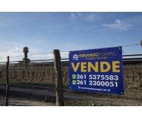 Fernandez poeppel vende finca uvas vinas vinificacion la arboleda tupungato