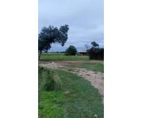 Vendo campo 6000 ha