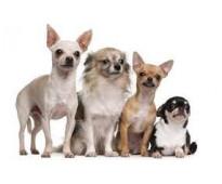 Guarderia canina, pensionado canino
