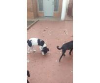 Cachorros en adopción!