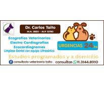 Veterinario ecografías -electrocardiografia-ecocardiogramas