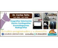 Radiografías y ecografías veterinarias en florida