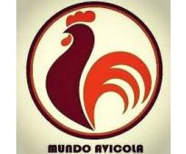 Mundo avicola tel: 3512701919  mayorista y venta por mayor de pollos en barrio p...
