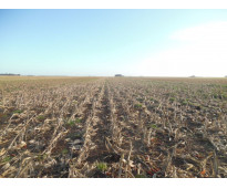 173 has. c. dorrego - agricola
