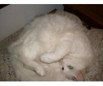 Consulta veterinaria a domicilio - boulogne, munro, v adelina