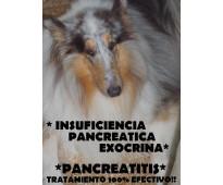 Pancreas bovina fresca x kg.