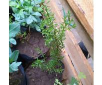 Vendo plantas cactus árboles autoctonos nativos suculentas aromaticas