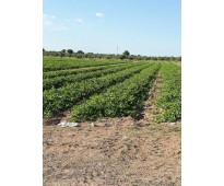 Vendo campo 33 hectáreas  a 16 km de la capital