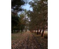 Excelente campo de 200 hectareas y casa  con detalles de categoria única