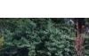 Lote en venta en rio ceballos