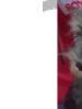 Cachorros schnauzer miniatura macho sal y pimienta criamas