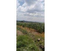 Rancho en venta huanímaro gto. 52 hectáreas