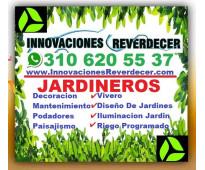 ⭐ vivero medellin, grama, pasto, césped, plantas, arboles, silletas, flores, tie...