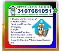 ⭐ veterinario palmira, veterinaria, esterilizacion, vacunacion, cirugias, examen...