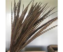 Plumas de cola de faisán de alta calidad