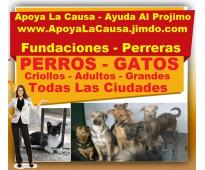 ⭐ barato, adopta perros y gatos, criollos, grandes, adultos, viejos, adopcion, f...