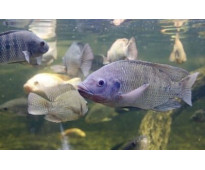 Mana te ayudará a iniciarte en el mundo de la acuicultura