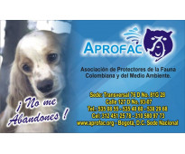 Cursos de peluqueria canina certificados