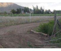 Putaendo dueño vende terreno 8000 m2 con 50 nogales en produccion