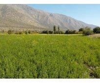 Vendo 23 hectáreas agrícolas con 23 acc. de agua a $ 18 millones la há