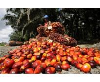 Aceite agrícola crudo para cocinar y biodiésel